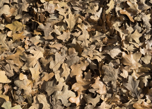 dry_leaves_realcolor_1